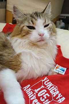 190716赤Tシャツb.jpg