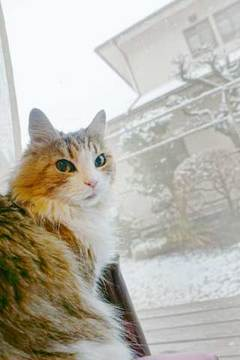 180122雪だニャa.jpg