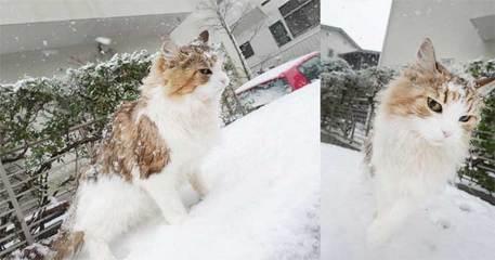 180122雪だニャcb.jpg