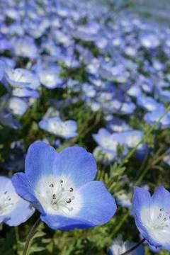 190507青い花.jpg