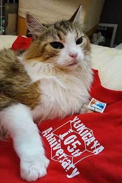 190716赤Tシャツa.jpg